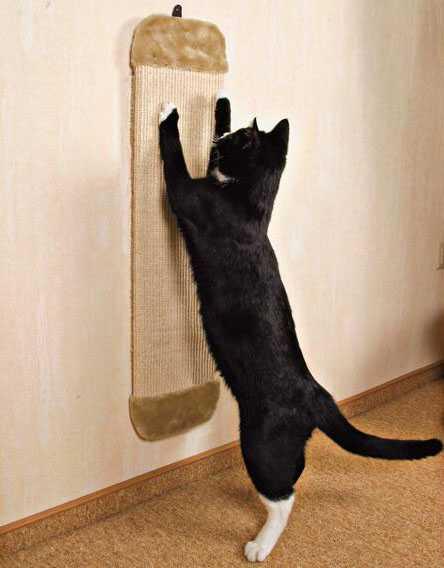 Точилка коту своими руками