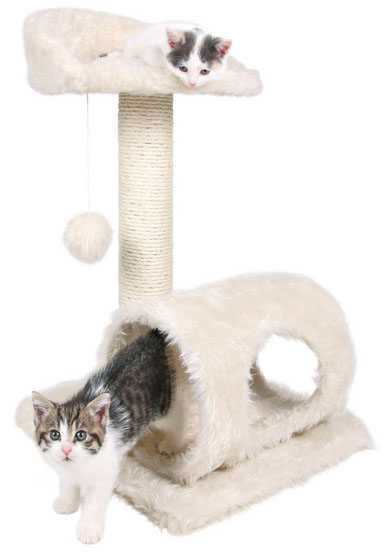 cat positions and meanings